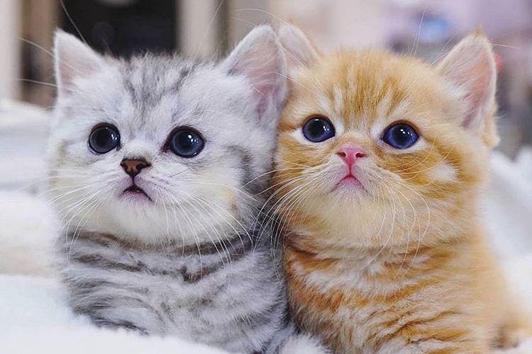5 Kandungan Makanan untuk Kucing Umur 2 Bulan